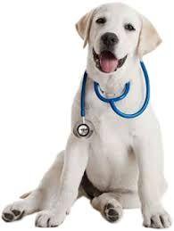 Campanya de vacunació d'animals de companyia
